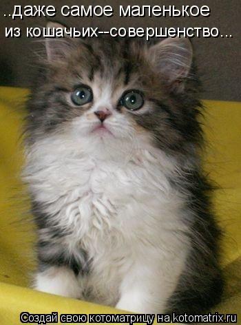 Котоматрица: ..даже самое маленькое из кошачьих--совершенство...