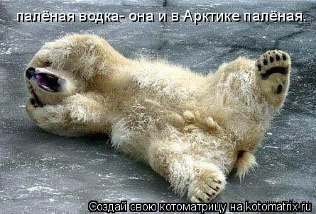 Котоматрица: палёная водка- она и в Арктике палёная.