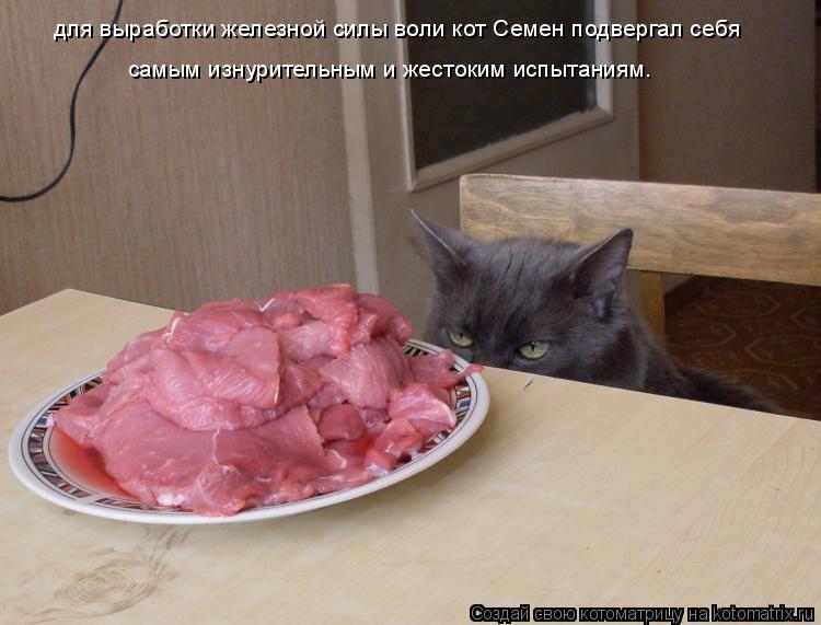 Котоматрица: для выработки железной силы воли кот Семен подвергал себя  самым изнурительным и жестоким испытаниям.