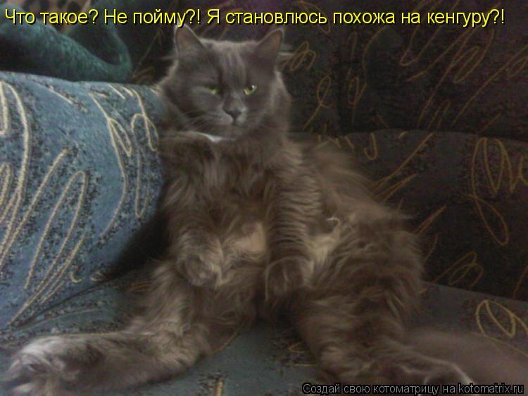 Котоматрица: Что такое? Не пойму?! Я становлюсь похожа на кенгуру?!