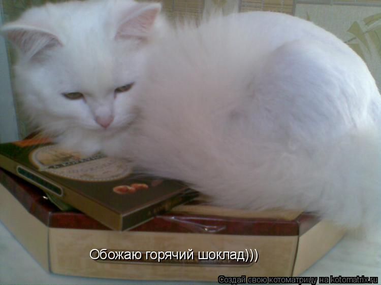 Котоматрица: Обожаю горячий шоклад)))
