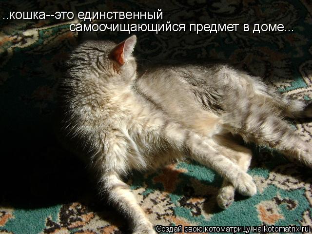 Котоматрица: ..кошка--это единственный самоочищающийся предмет в доме...