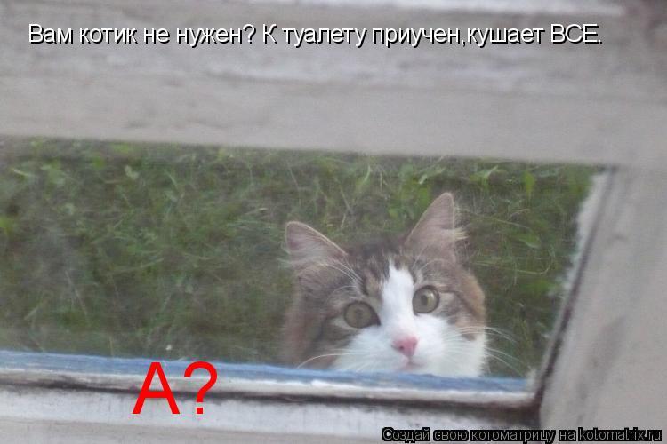 Котоматрица: Вам котик не нужен? К туалету приучен,кушает ВСЕ. А?