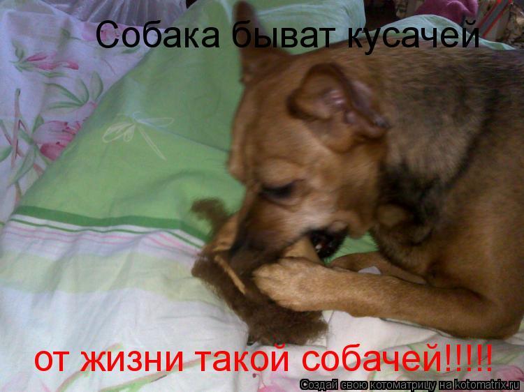 Котоматрица: Собака быват кусачей от жизни такой собачей!!!!!