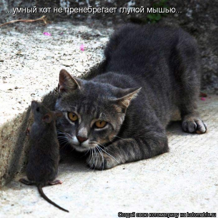 Котоматрица: ...умный кот не пренебрегает глупой мышью...