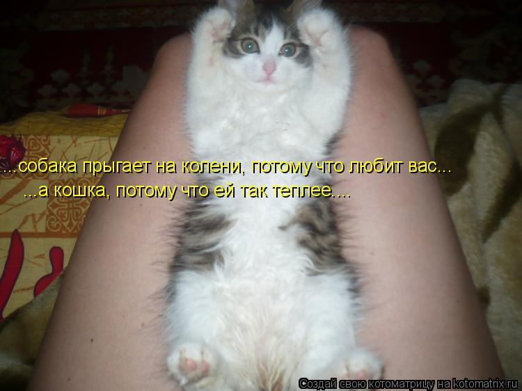Котоматрица: ...собака прыгает на колени, потому что любит вас... ...а кошка, потому что ей так теплее....