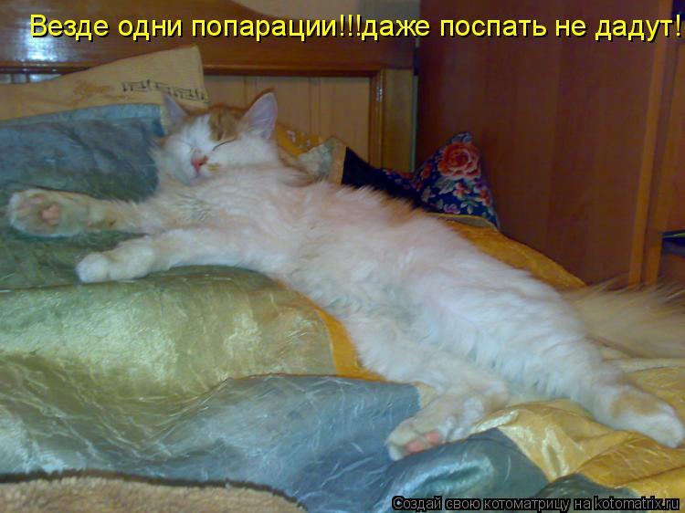 Котоматрица: Везде одни попарации!!!даже поспать не дадут!!!