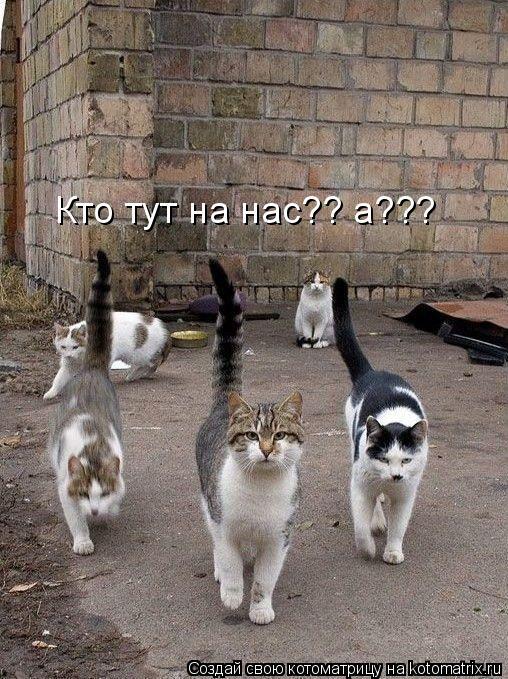 Котоматрица: Кто тут на нас?? а???
