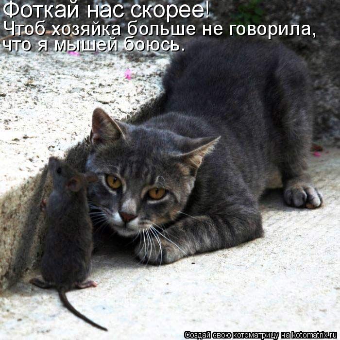 Котоматрица: Фоткай нас скорее! Чтоб хозяйка больше не говорила, что я мышей боюсь.