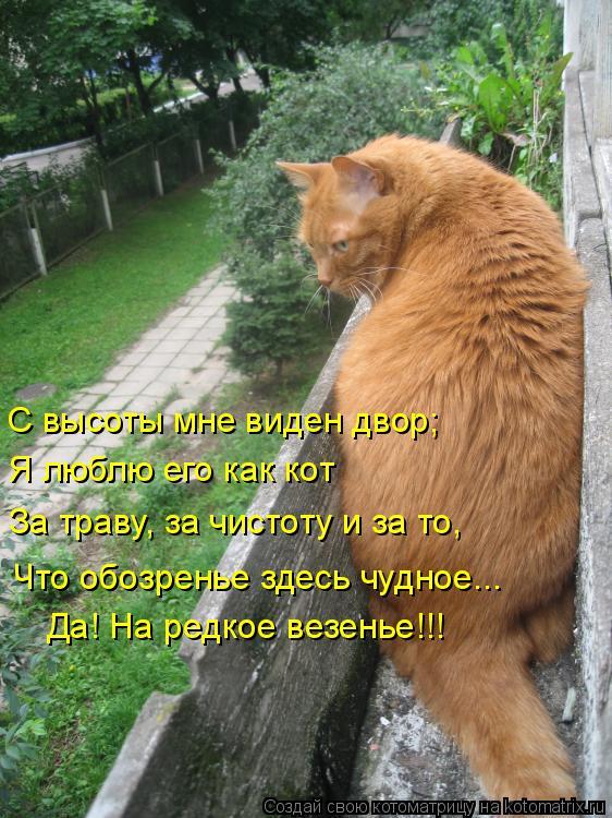 Котоматрица: С высоты мне виден двор; Я люблю его как кот За траву, за чистоту и за то, Что обозренье здесь чудное... Да! На редкое везенье!!!