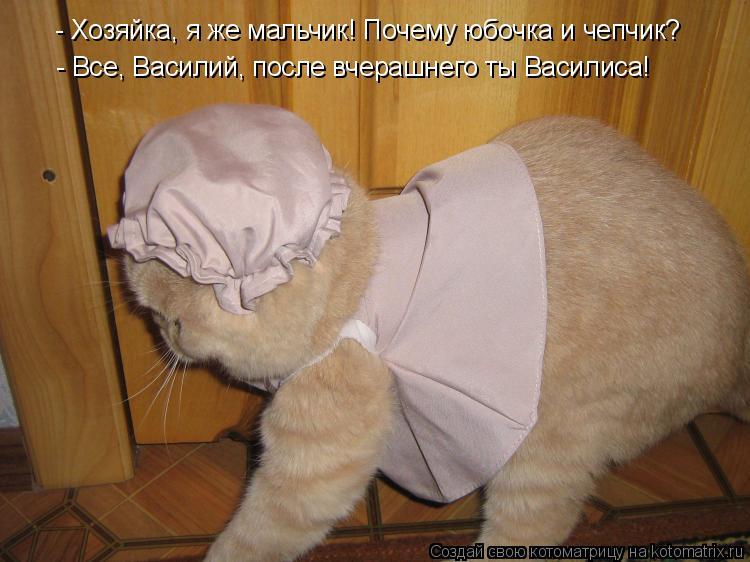 Котоматрица: - Хозяйка, я же мальчик! Почему юбочка и чепчик? - Все, Василий, после вчерашнего ты Василиса!