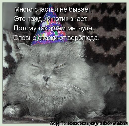 Котоматрица: Много счастья не бывает, Это каждый котик знает. Потому так ждём мы чуда, Словно сказки от верблюда.