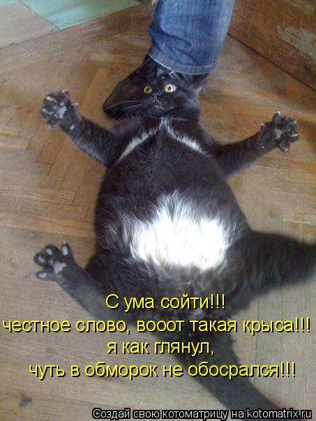 Котоматрица: С ума сойти!!! честное слово, вооот такая крыса!!! я как глянул, чуть в обморок не обосрался!!!