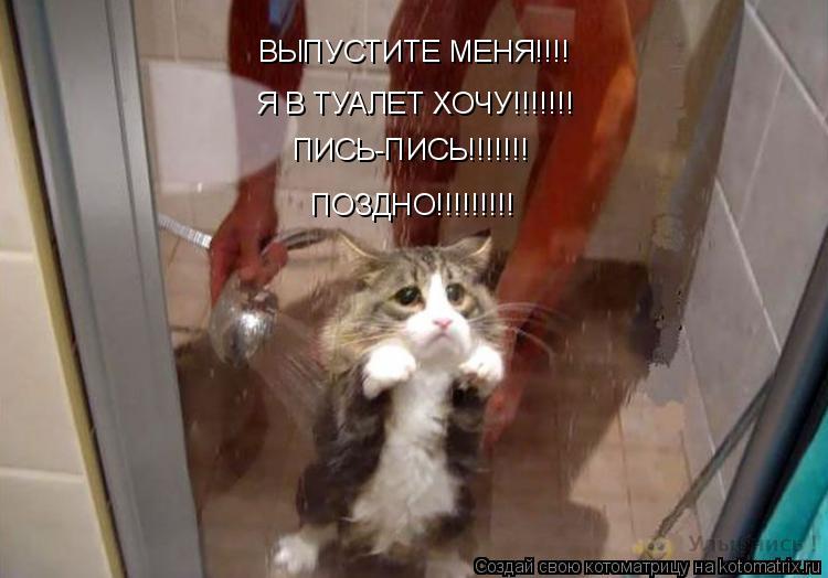 Котоматрица: ВЫПУСТИТЕ МЕНЯ!!!! Я В ТУАЛЕТ ХОЧУ!!!!!!! ПИСЬ-ПИСЬ!!!!!!! ПОЗДНО!!!!!!!!!