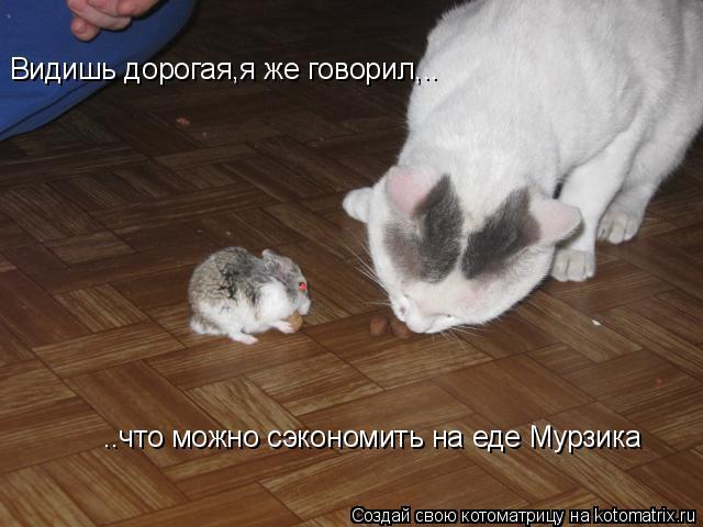 Котоматрица: Видишь дорогая,я же говорил,.. ..что можно сэкономить на еде Мурзика