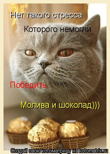 Котоматрица: Нет такого стресса Которого немогли Победить Молива и шоколад)))