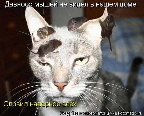 Котоматрица: Давнооо мышей не видел в нашем доме, Словил наверное всех