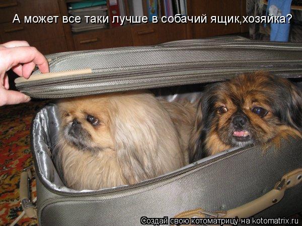 Котоматрица: Хозяйка!А ты уверена ,что мы за наряды сойдем? А может все таки лучше в собачий ящик,хозяйка?