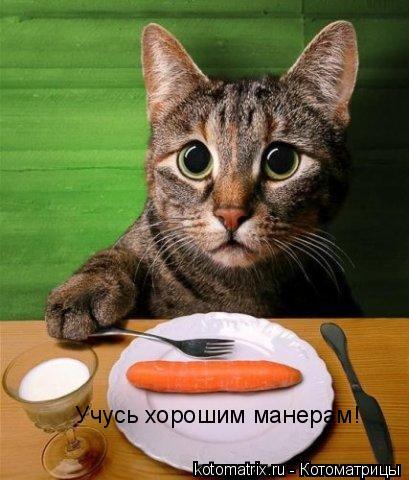 Котоматрица: Учусь хорошим манерам!