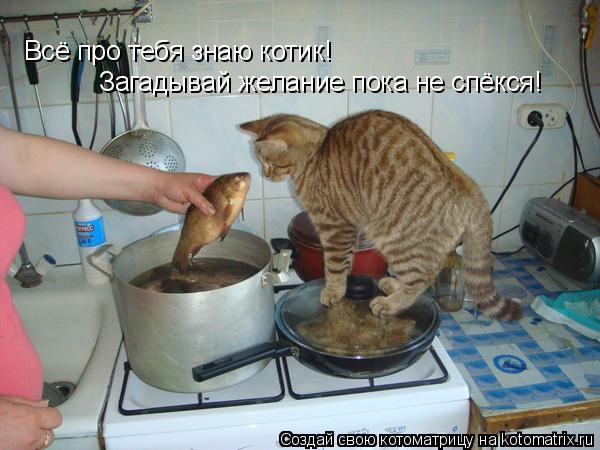 Котоматрица: Всё про тебя знаю котик! Загадывай желание пока не спёкся!