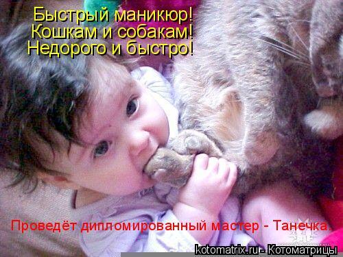 Котоматрица: Быстрый маникюр! Кошкам и собакам! Недорого и быстро! Проведёт дипломированный мастер - Танечка.