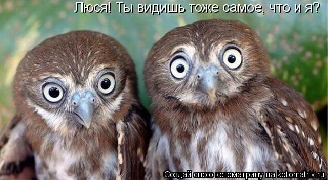 Котоматрица: Люся! Ты видишь тоже самое, что и я?