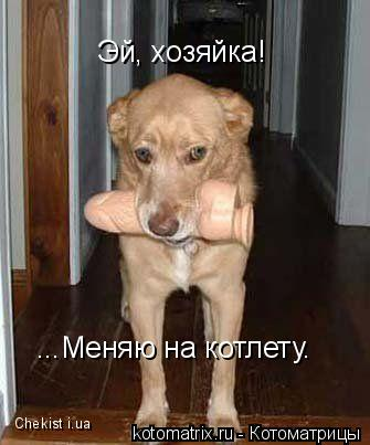 Котоматрица: Эй, хозяйка! ...Меняю на котлету. Chekist i.ua