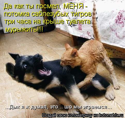 Котоматрица: Да как ты посмел, МЕНЯ -  потомка саблезубых тигров три часа на крыше туалета мурыжить!!! ...Дык я ж думал, это... шо мы играемся...