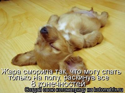 Котоматрица: Жара сморила так, что могу спать только на полу, раскинув все  8 конечностей.
