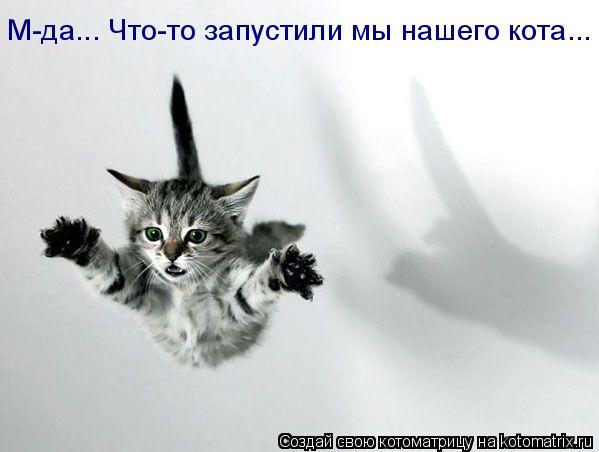 Котоматрица: М-да... Что-то запустили мы нашего кота...