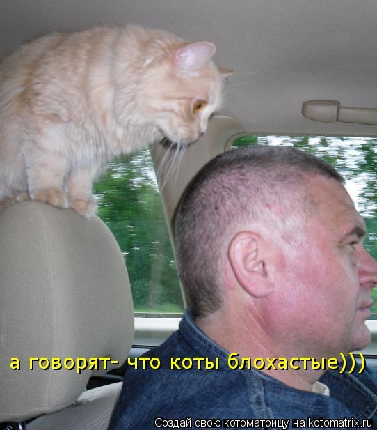 Котоматрица: а говорят- что коты блохастые)))