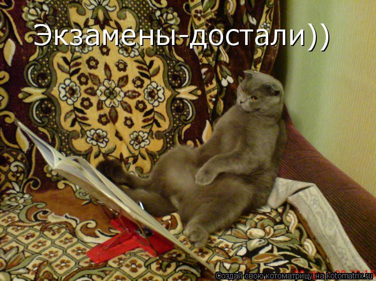 Котоматрица: Экзамены-достали))