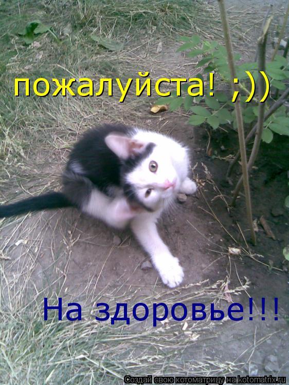 Котоматрица: пожалуйста! ;)) На здоровье!!!