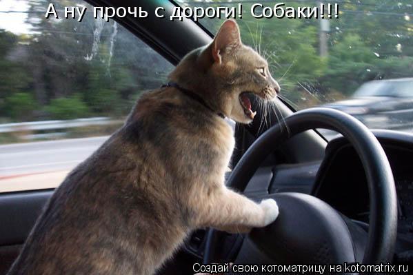 Котоматрица: А ну прочь с дороги! Собаки!!!