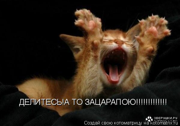Котоматрица: ДЕЛИТЕСЬ!А ТО ЗАЦАРАПОЮ!!!!!!!!!!!!!