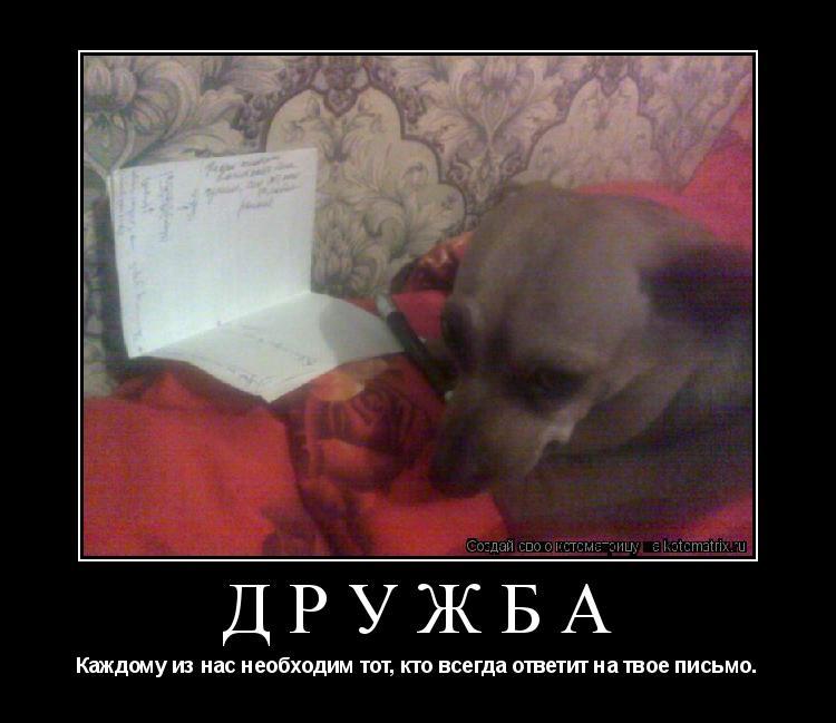 Котоматрица: Дружба Каждому из нас необходим тот, кто всегда ответит на твое письмо.