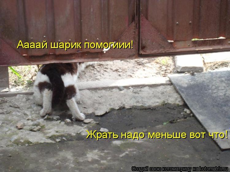 Котоматрица: Аааай шарик помогиии! Жрать надо меньше вот что!