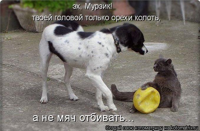 Котоматрица: эх, Мурзик! твоей головой только орехи колоть, а не мяч отбивать...
