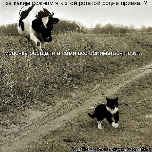 Котоматрица: за каким рожном я к этой рогатой родне приехал? молочка обещали.а сами все обниматься лезут...