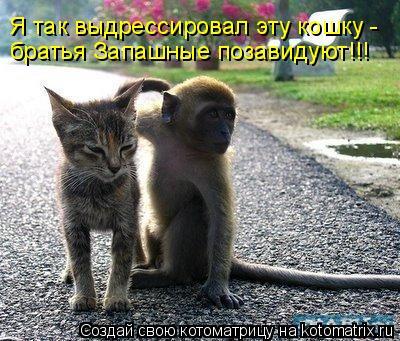 Котоматрица: Я так выдрессировал эту кошку - братья Запашные позавидуют!!!