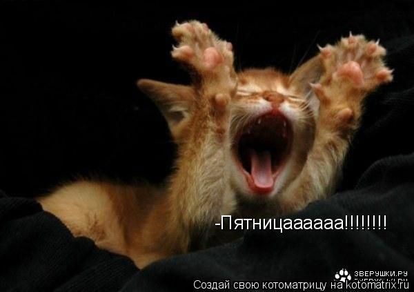 Котоматрица: -Пятницаааааа!!!!!!!!