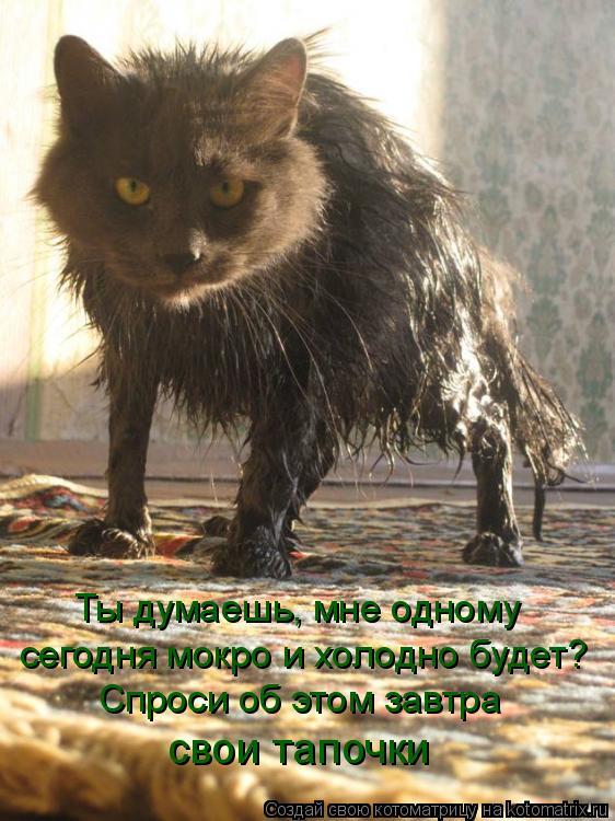 Котоматрица: Ты думаешь, мне одному сегодня мокро и холодно будет? Спроси об этом завтра свои тапочки