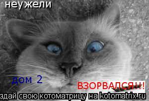 Котоматрица: неужели дом 2 ВЗОРВАЛСЯ!!!