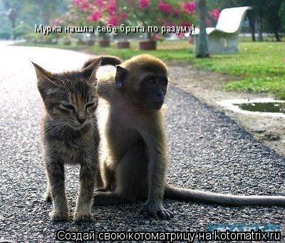 Котоматрица: Мурка нашла себе брата по разуму!