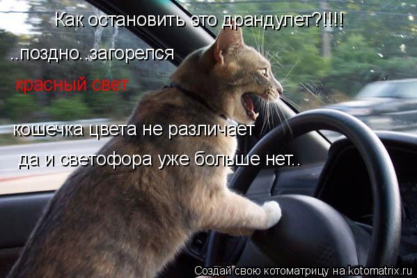 Котоматрица: Как остановить это драндулет?!!!! ..поздно..загорелся  красный свет кошечка цвета не различает да и светофора уже больше нет..