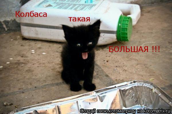 Котоматрица: Колбаса такая БОЛЬШАЯ !!!