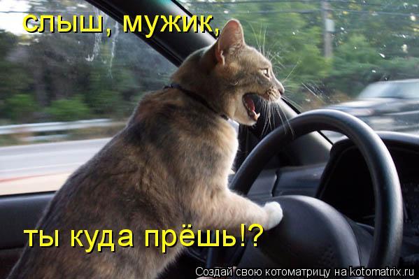 Котоматрица: слыш, мужик, ты куда прёшь!?