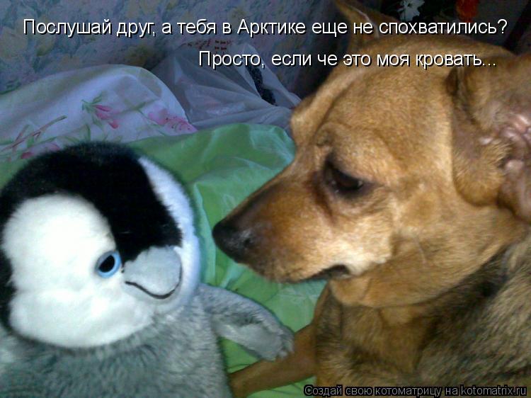 Котоматрица: Послушай друг, а тебя в Арктике еще не спохватились? Просто, если че это моя кровать...