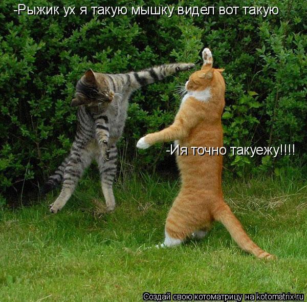Котоматрица: -Рыжик ух я такую мышку видел вот такую -Ия точно такуежу!!!!