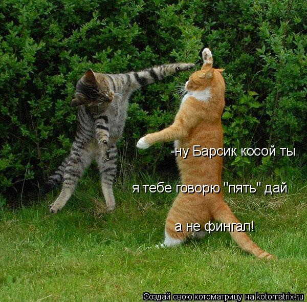 """Котоматрица: -ну Барсик косой ты я тебе говорю """"пять"""" дай а не фингал!"""